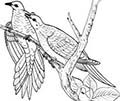 dove pair drawing