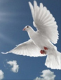 Amazing Grace Doves